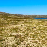 Drones y satélites retratan un Ártico cada vez más verde