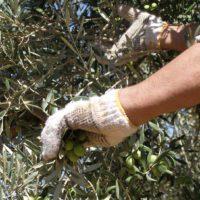 El Plan Planas llega a un sector agrario dignificado por el coronavirus