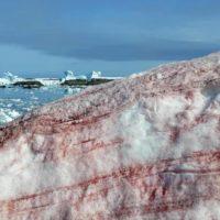 El hielo de la Antártida cambia su color a un intenso rojo sangre