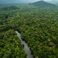 Los grandes ecosistemas colapsarán antes que los más pequeños