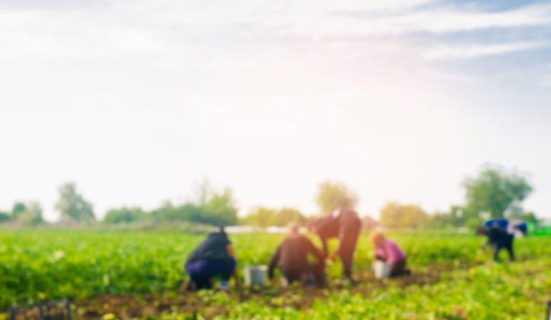 ¿Será la agricultura el antídoto contra el paro?