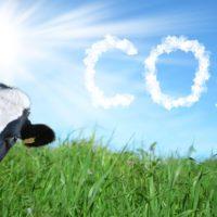El COVID confirma que la ganadería no es responsable del CO2