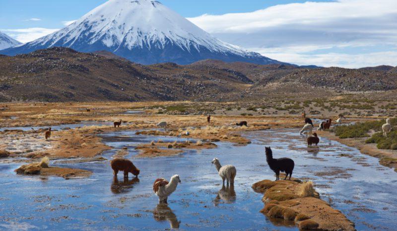 Los desafíos ambientales de Chile tras el Covid-19