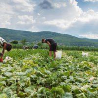 El sector agroalimentario recela de la estrategia verde