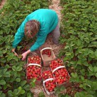 El paro agrario crece un 4% mientras faltan manos en el campo