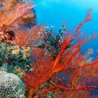 España establece una veda de dos años para el coral rojo