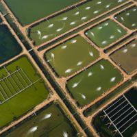 Un estudio constata la seguridad alimentaria de la acuicultura en aguas regeneradas
