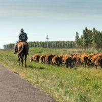 La sequía lleva a Uruguay a declarar el estado de emergencia agropecuaria