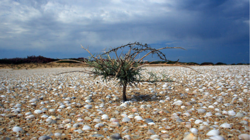 El mar de Aral y el laboratorio escondido de la muerte