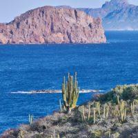 Sonora, donde el desierto encuentra al mar y a la ballena gris