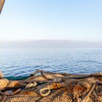 La pesca y la acuicultura están totalmente disociadas de las emisiones GEI