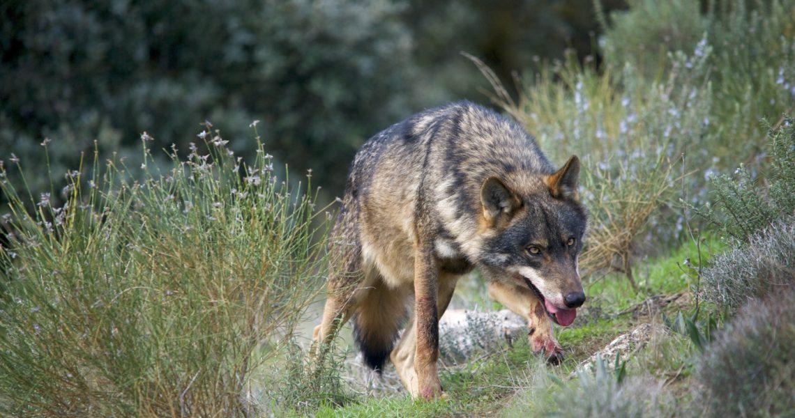 El confinamiento da un respiro a la fauna salvaje en el campo español