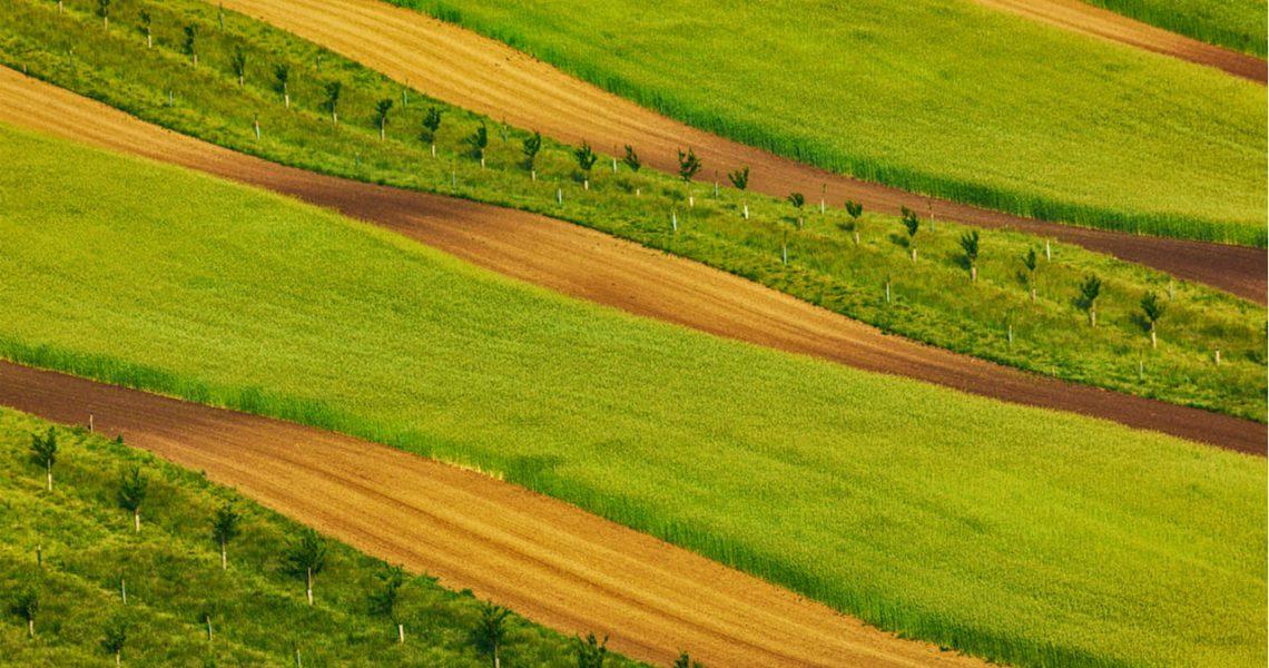 La política agraria a partir de 1975 (III)