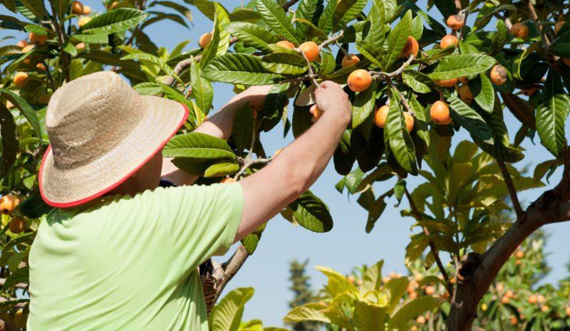 Corazones y fruta, la cosecha de España
