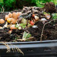 ¿Sabes cómo se separan los residuos orgánicos?