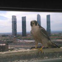 La fauna retoma la ciudad durante el coronavirus
