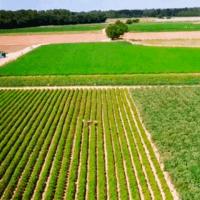 Madrid preserva 130.000 hectáreas para prevenir concentración de fertilizantes en el agua