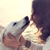 Sanidad dice que ya existen algunos casos de contagio del coronavirus a perros y gatos