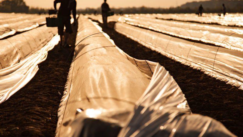 La agricultura es el único sector que creció en el segundo trimestre en pleno desplome del PIB