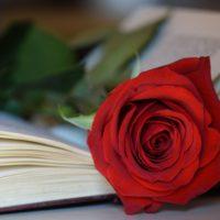 Las rosas de papel no dan de comer al sector de la flor cortada
