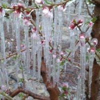 Las heladas tardías aumentaron en el 35% de regiones forestales europeas