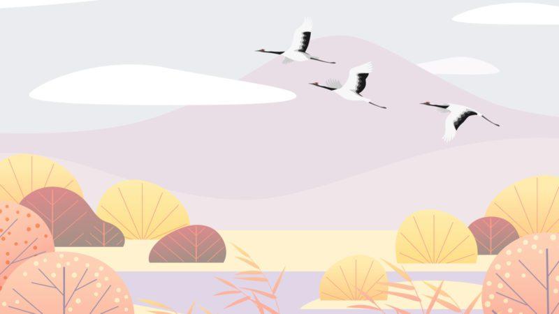 ¿Cuánto sabes sobre aves migratorias?