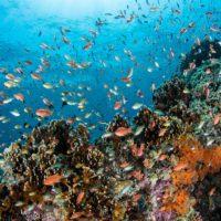 Día Mundial de la Biodiversidad: la lucha por el planeta