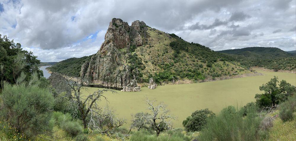 El río Tajo a su paso por Parque Nacional de Monfragüe repleto de azolla o helecho de agua, una planta invasora que amenaza a especies autóctonas | Foto: @LaBioHuella