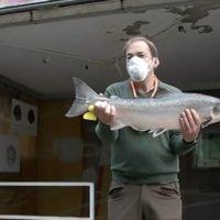 El 'campanu', el primer salmón de 2020, pescado con mascarilla