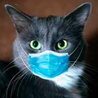 Detectado el primer caso de gato infectado con Covid-19 en España