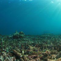 La acidificación oceánica se podrá predecir con cinco años de antelación