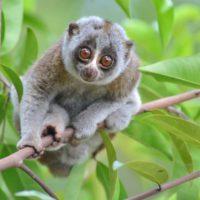 El Congreso Mundial de la Naturaleza definirá las prioridades de conservación