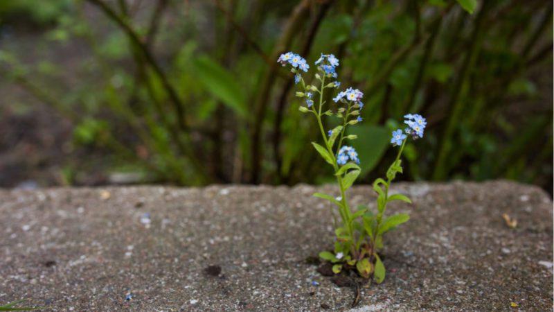 Una tiza para resaltar a la olvidada y vital flora urbana