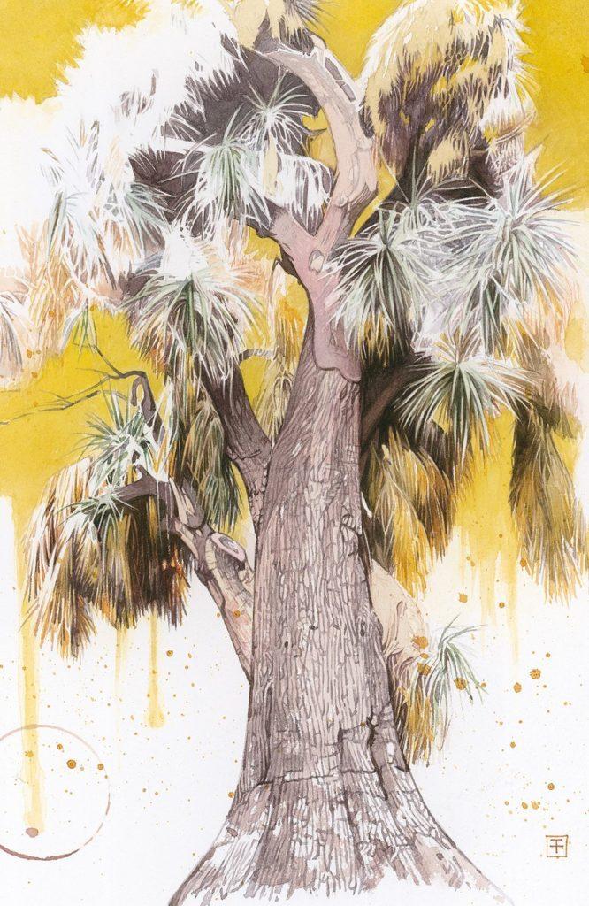 Ilustración de una planta de 'Yucca filifera', o palma saamandoca, originaria del centro y noreste de México, por Fernando Fueyo.   Crédito: Fernando Fueyo