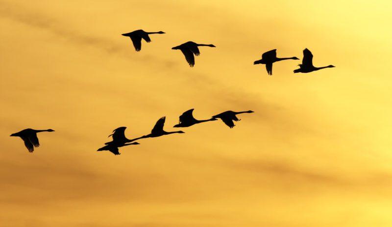 Día de las Aves Migratorias: alas que conectan el mundo