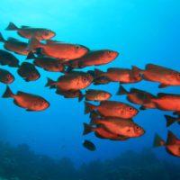 Las especies marinas son más sensibles al cambio climático
