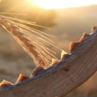 El CSIC revela dos rutas de expansión de la tecnología agraria neolítica