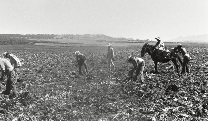 La reforma agraria de la Segunda República (I)