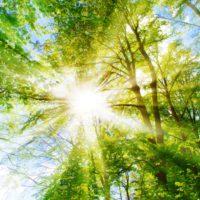 Empresa, sociedad y política se unen para pedir al Congreso una recuperación verde