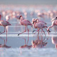 Los flamencos tiñen Málaga de rosa durante el confinamiento