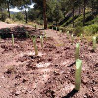 España lidera la plantación de 3.000 millones de árboles en Europa para 2030
