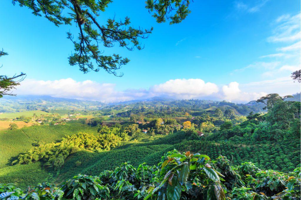 Una plantación de café cerca de Manizales en el Triángulo del Café de Colombia. | Foto: Danaan