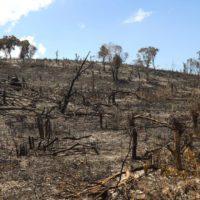 El peculiar método de la Tierra para almacenar el carbono de los incendios