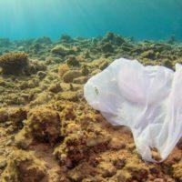 Día Mundial de los Océanos: la necesaria protección de unos ecosistemas en declive