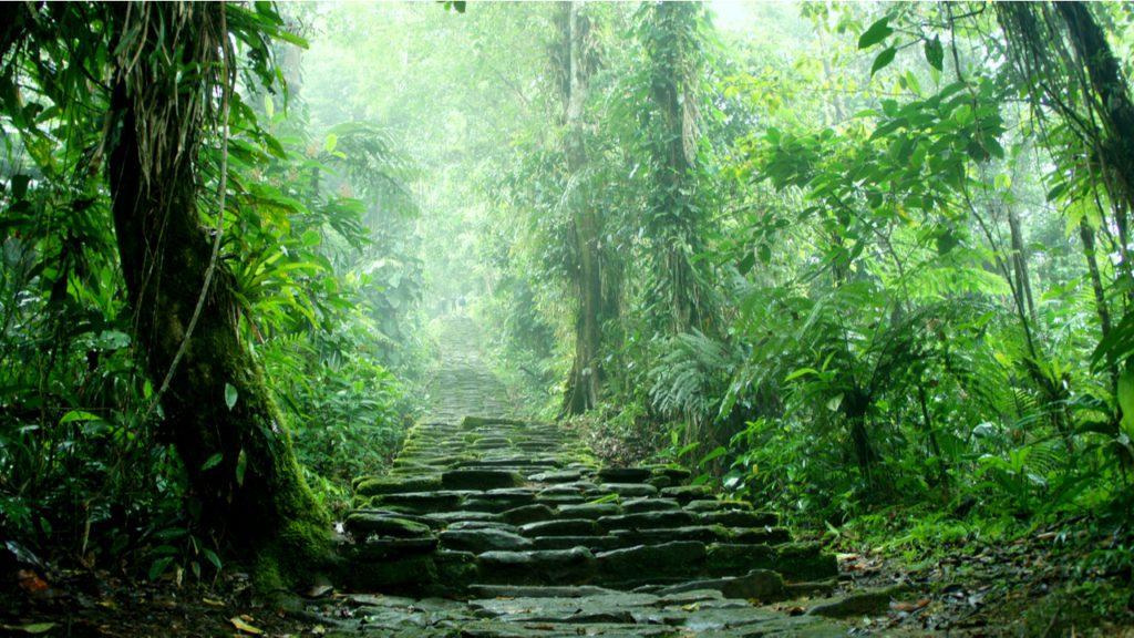 Escalera oculta en el interior de la jungla que pertenece a las ruinas de Ciudad Perdida en la Sierra Nevada de Santa Marta, en Colombia. | Foto: Dunn4040
