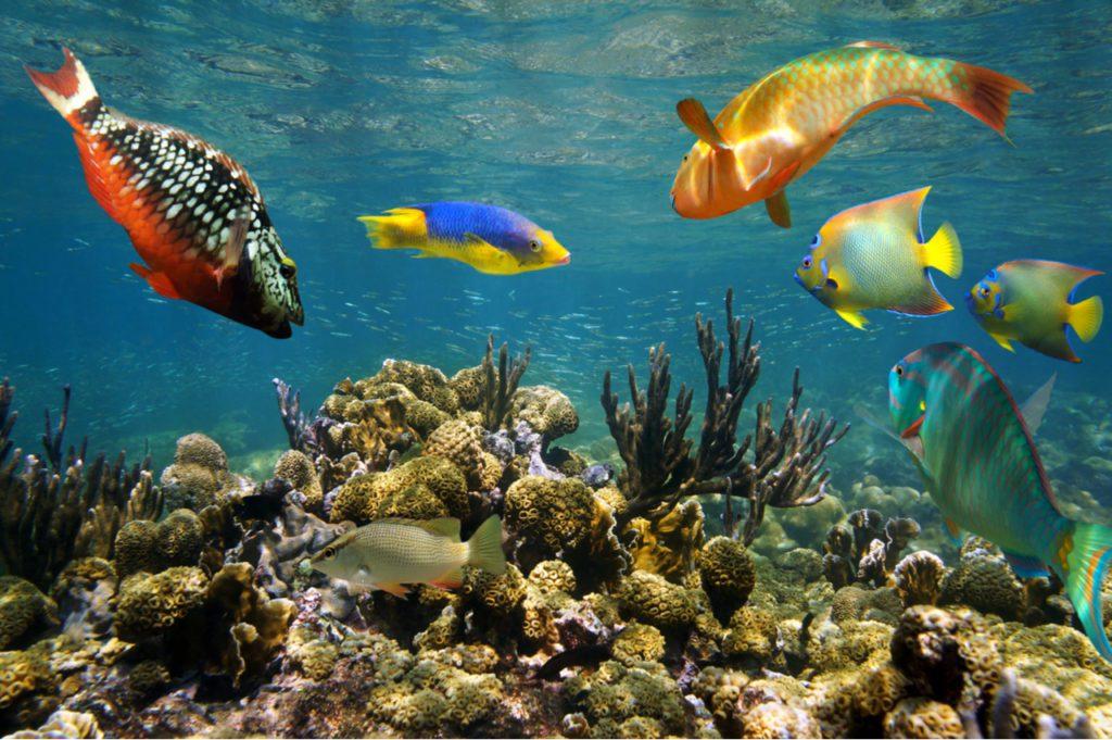 Peces tropicales en los arrecifes del Caribe de Colombia. | Foto: Damsea