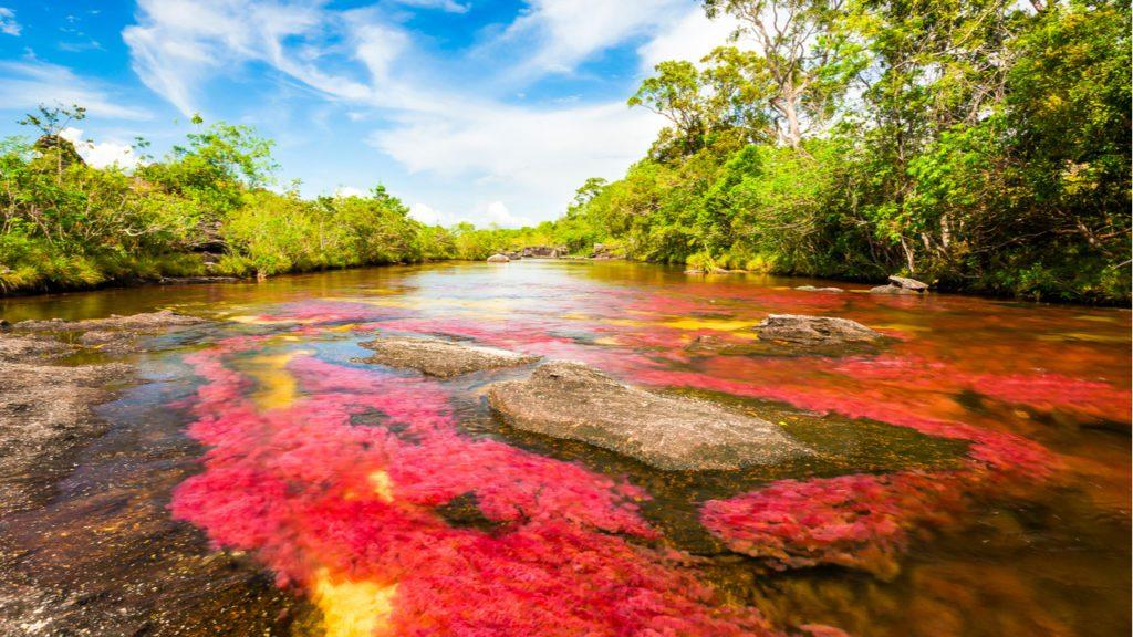 El río conocido como Caño Cristales, que muestra un arco iris de colores por las plantas que lo tapizan. Se encuentra en la sierra de la Macarena, en el departamento del Meta. | Foto: VarnaK