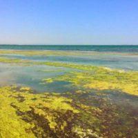 Empeora el estado del Mar Menor