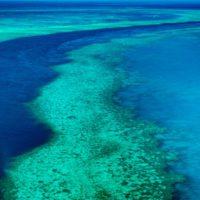 Un dron permite ver a 64.000 tortugas en la Gran Barrera de Coral