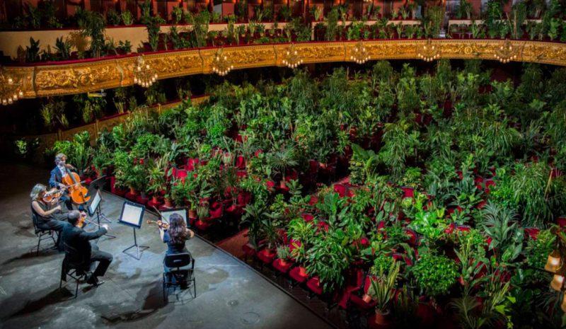 'Concierto por el bioceno' para más de 2.000 plantas